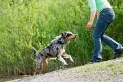 L'homme et le chien : un lien très fort les unis