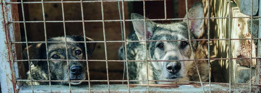 chiens-barreaux