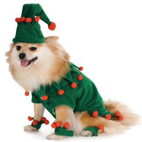 elfe-chien