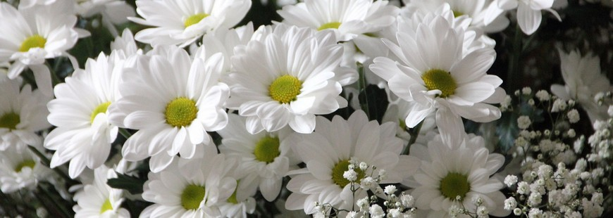 Pour répondre aux attentes de ses sociétaires, la Macif revoit son contrat « Garantie Obsèques »