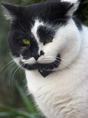 Comment l'assurance chat rembourse-t-elle un régime alimentaire ?