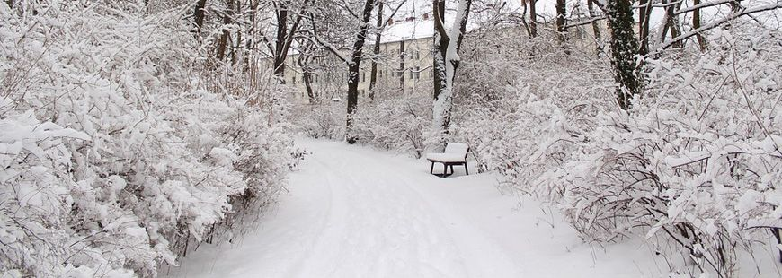 hiver-neige