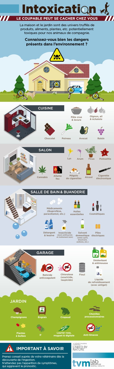 infographie-intoxication-animaux
