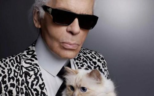 karl-largarfeld-chat-choupette