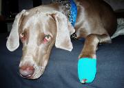 Protégez votre chien ou votre chat avec Allianz