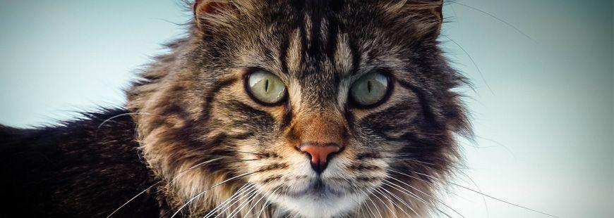 Les chats veulent-ils dominer le monde ?