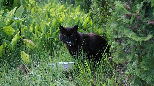 chat-noir-espace-vert-nourriture