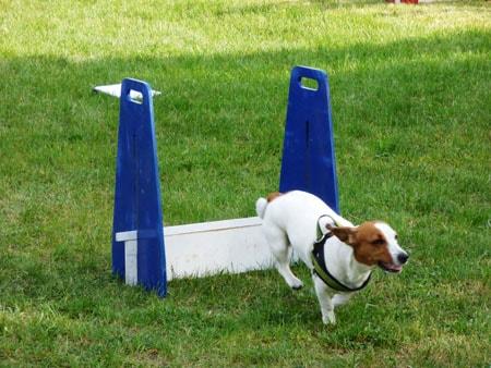 parcours-obstacles-chien
