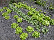 Cultivez vos fruits et légumes bio grâce à MonPotagerBio
