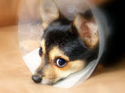Protégez votre chien sans vous ruiner