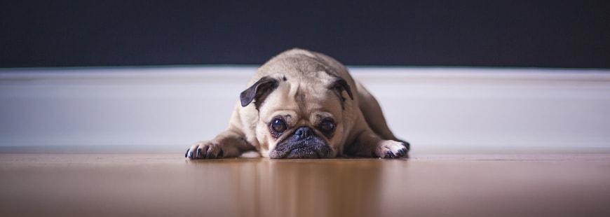 Quels objets connectés pour les animaux ?