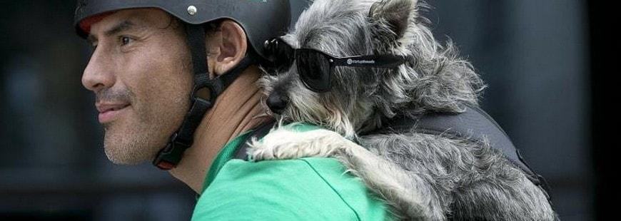 L'accessoire ultime pour les maîtres de chiens