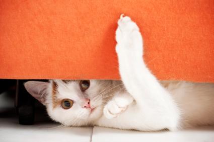 Santé de votre chat