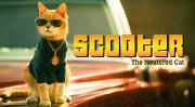 Découvrez Scooter, le chat stérilisé qui fait son show !