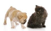 Souscrire une mutuelle pour ses animaux