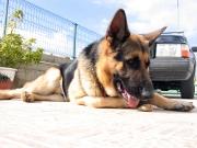 Pour une protection optimale de votre chien, assurez-le !