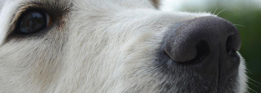 Un chien est à l'origine de l'amputation d'un Américain de 48 ans