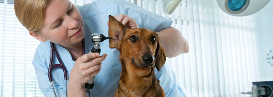 Soigner rapidement votre chien avec SOS PETS