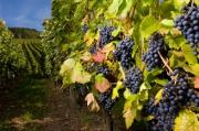 vigneassurance